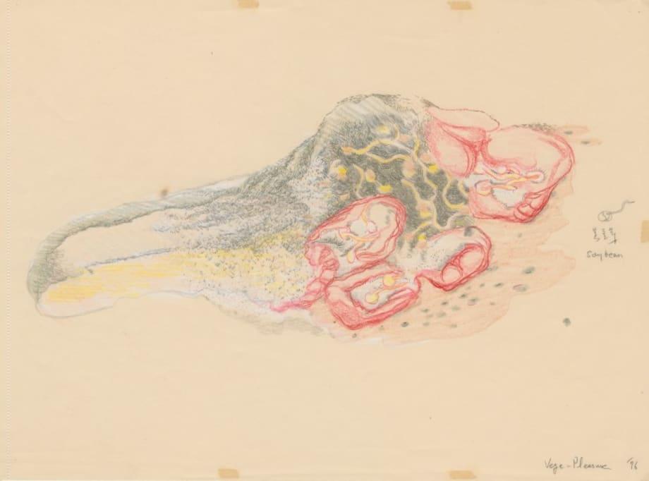 Vege-pleasure, the Drawings by Inga Svala Thorsdottir & Wu Shanzhuan