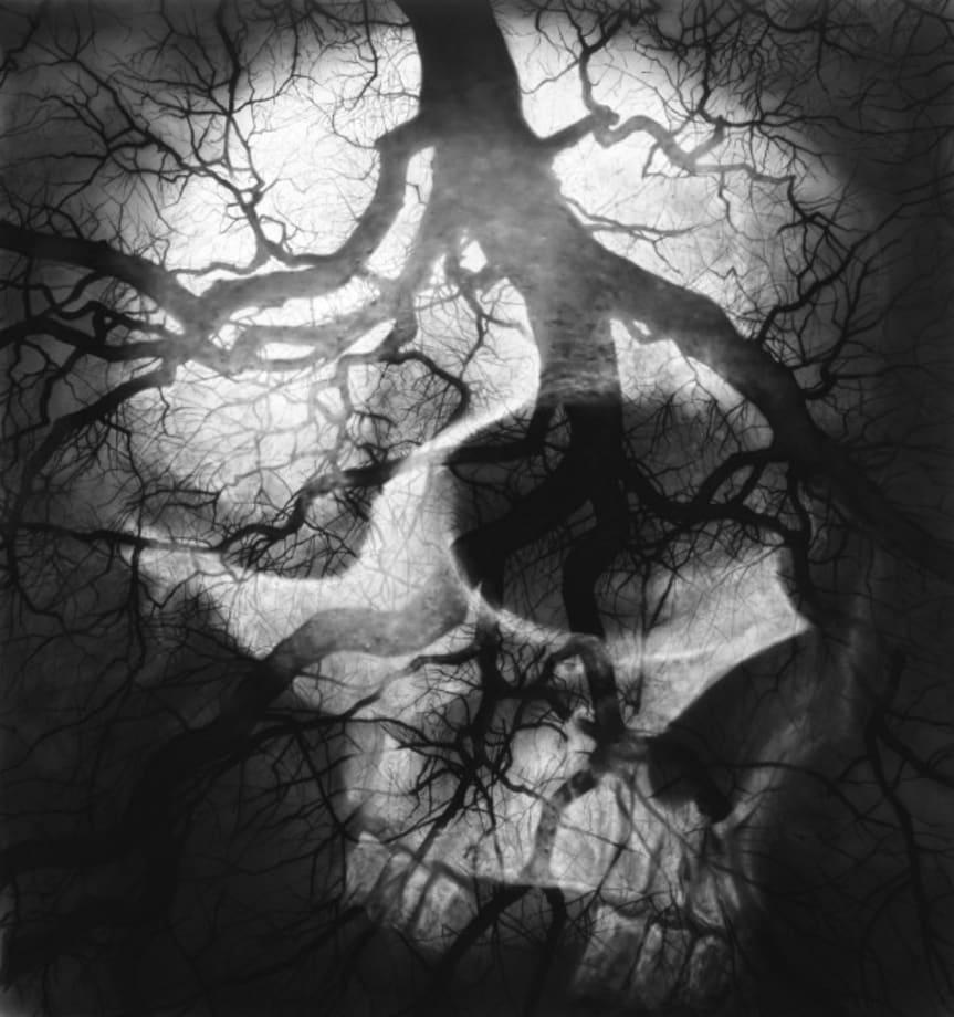 Untitled (Year Three, Stroke Life) by Robert Longo