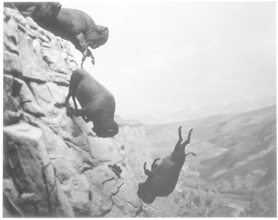 Untitled (Buffalos) by David Wojnarowicz