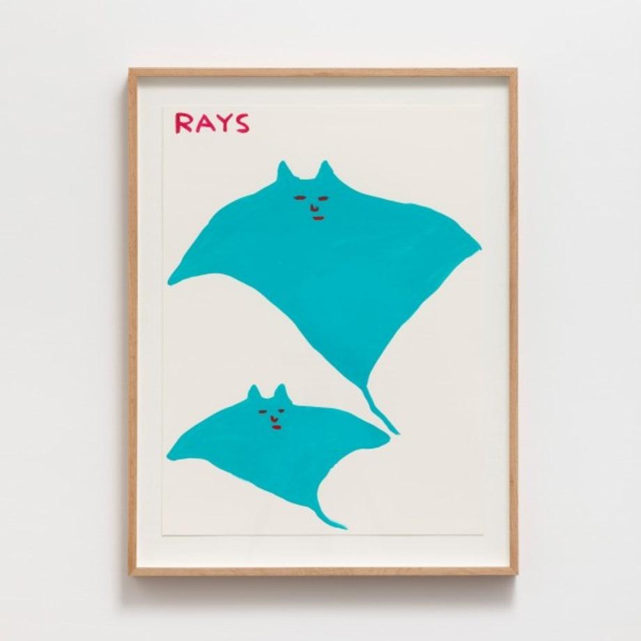 Untitled (Rays) by David Shrigley