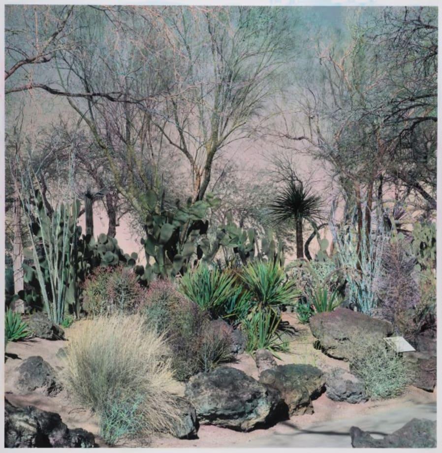 mm Cactus Garden by Shi Guowei