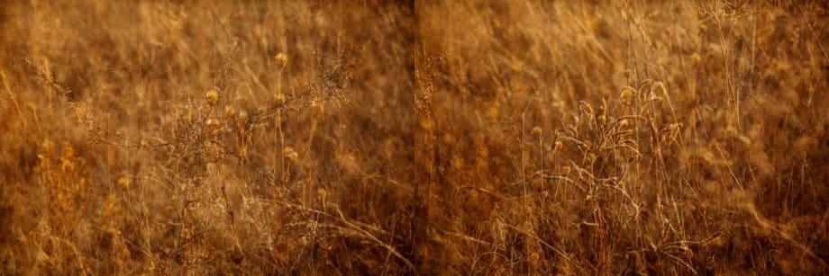 Grasscape 2/3 by Atul Bhalla