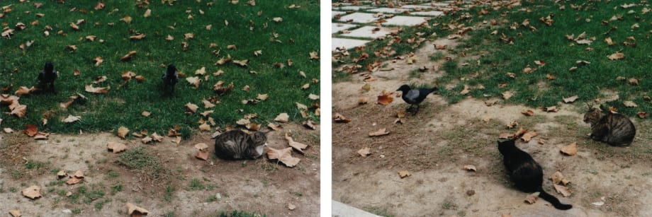 Cats and Crows by Shimabuku