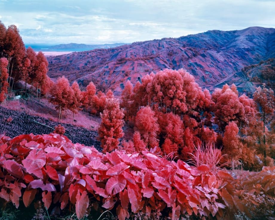 I Shall Be Released by Richard Mosse