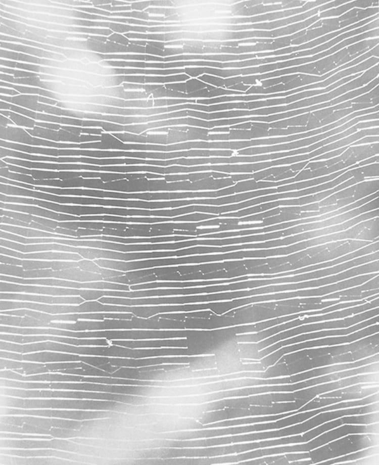 Untitled (Full Spiderweb) by Jochen Lempert