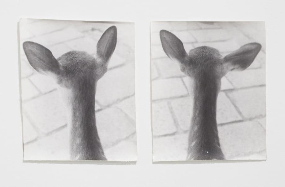 From Symmetry and Architecture (Deers) by Jochen Lempert