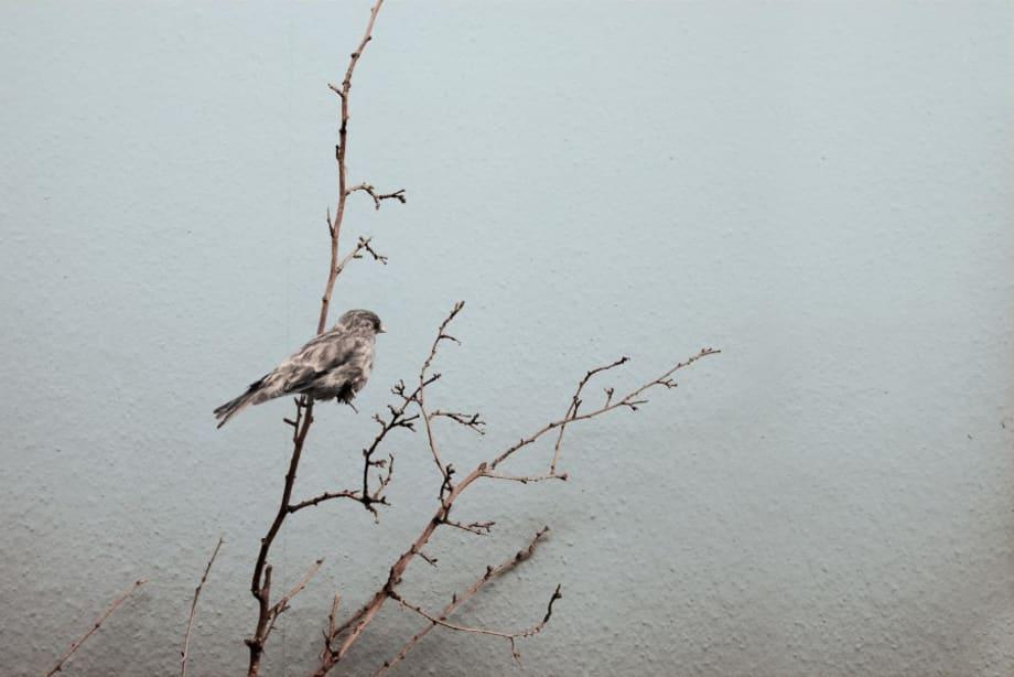 Recent Species of The New World -- Varient#12 2011 by Robert Zhao Renhui