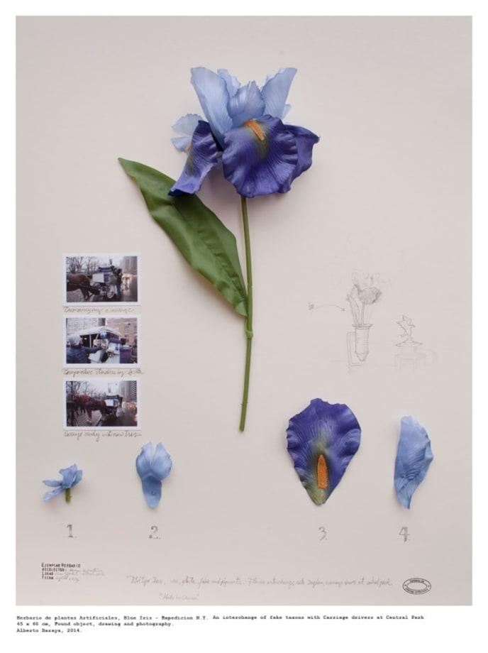 Orquidea Tequendama - Herbario de Plantas Artificiales by Alberto Baraya