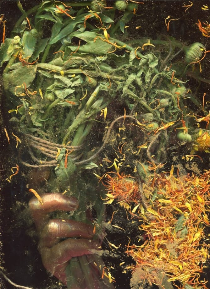 Marygold's Calendula by Lucie Stahl