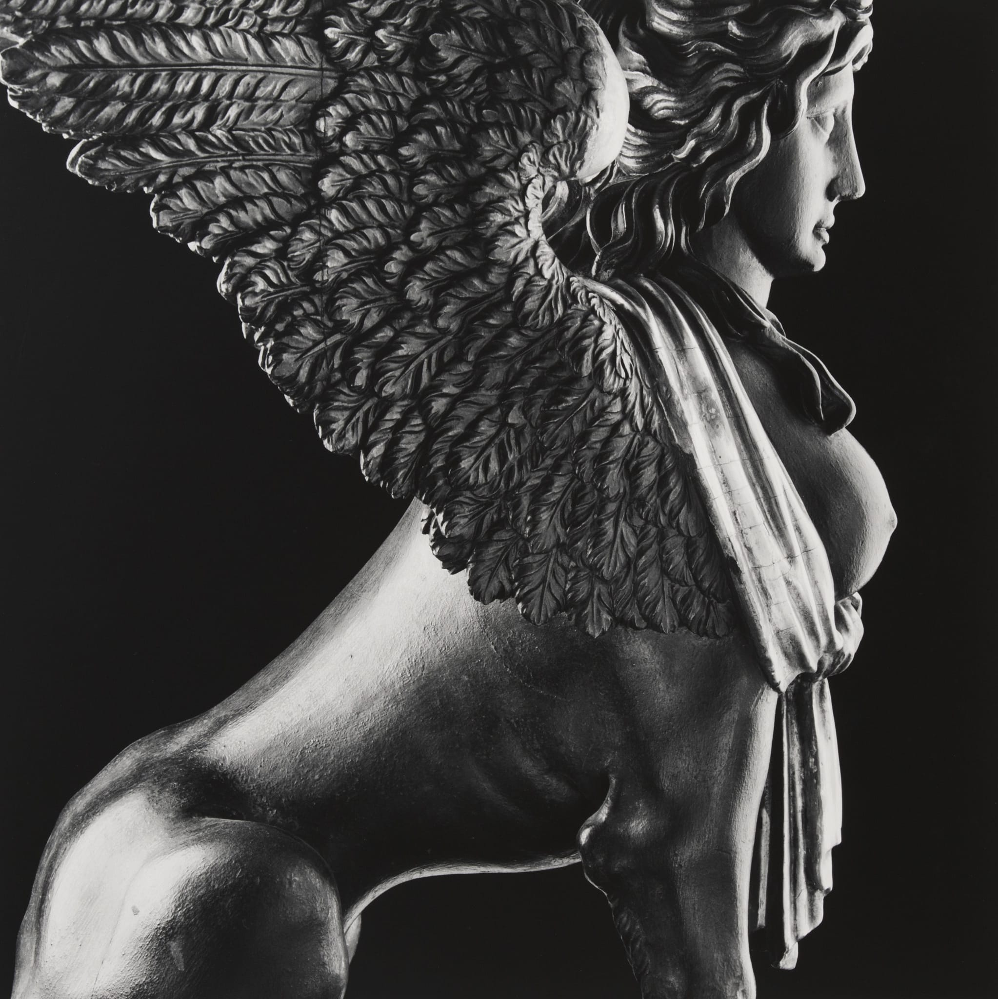 Sphinx by Robert Mapplethorpe