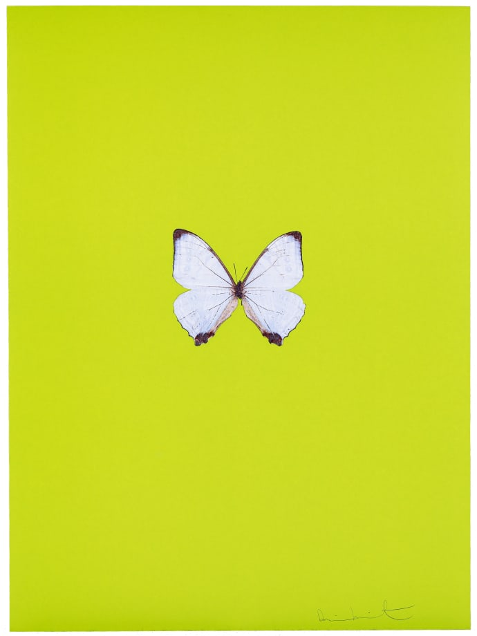 New Beginnings by Damien Hirst