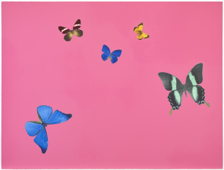 Lessons in Love by Damien Hirst