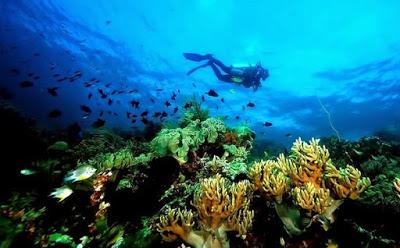Taman Laut Wakatobi Andalan Indonesia