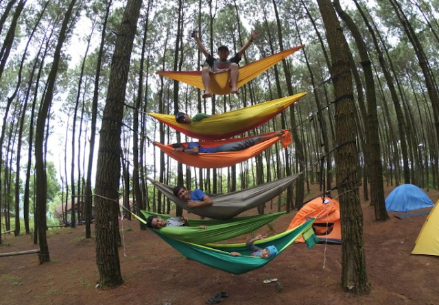 Lokasi hutan pinus jogja