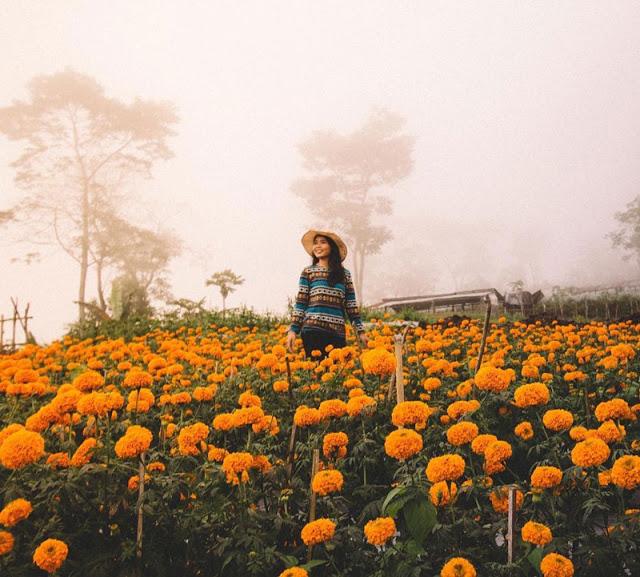 Wisata Selain pantai ada Kebun Bunga Munduk di Bali
