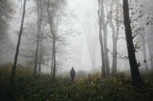 scary nightmare woods