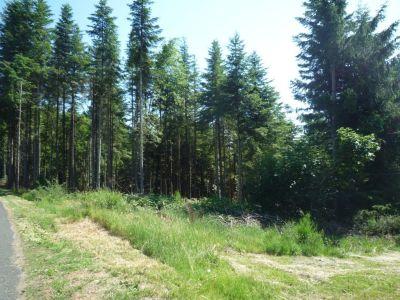 Proche Centre - calme- en bordure de bois