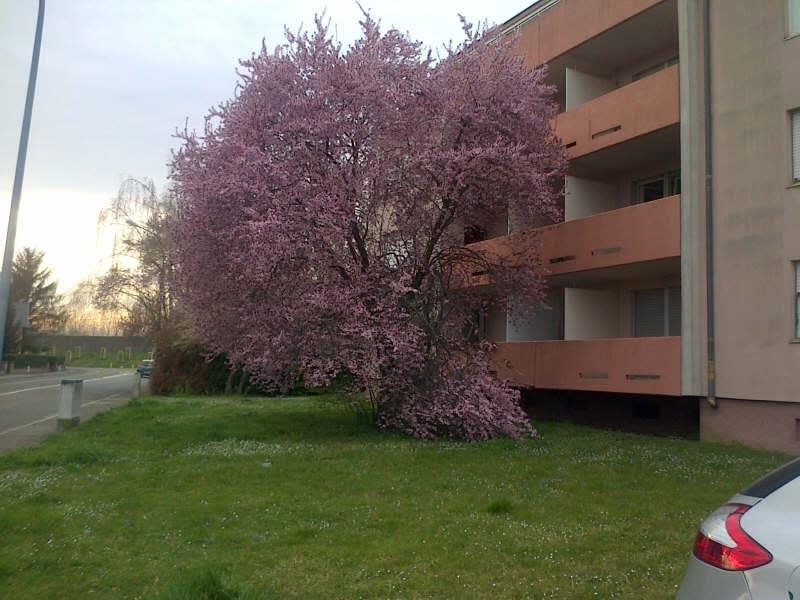 Location appartement Illkirch graffenstaden 394€ CC - Photo 5