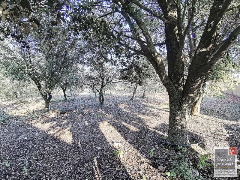 Vente terrain Carpentras 130000€ - Photo 1