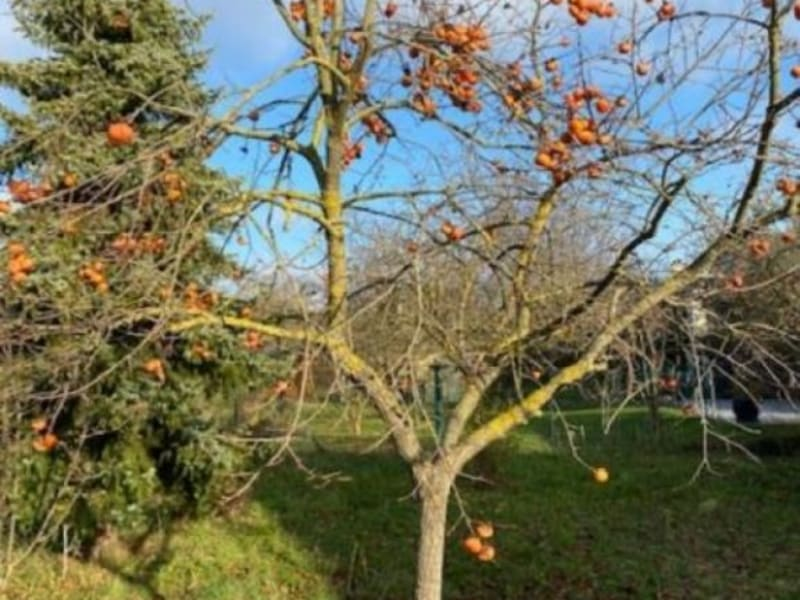 Sale site Carrieres s seine 531960€ - Picture 3