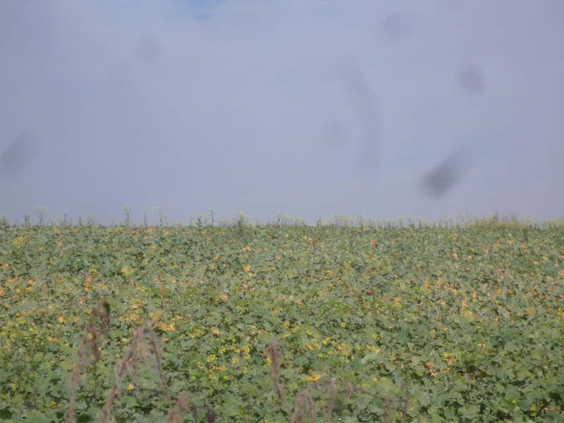 Vente terrain St maixent l ecole 187200€ - Photo 2