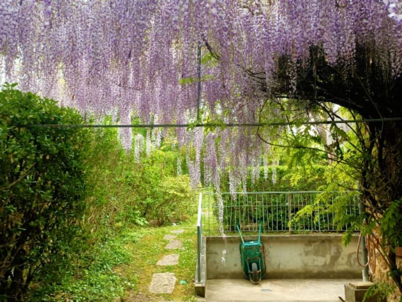 Vente maison / villa Maisons laffitte 1385000€ - Photo 3