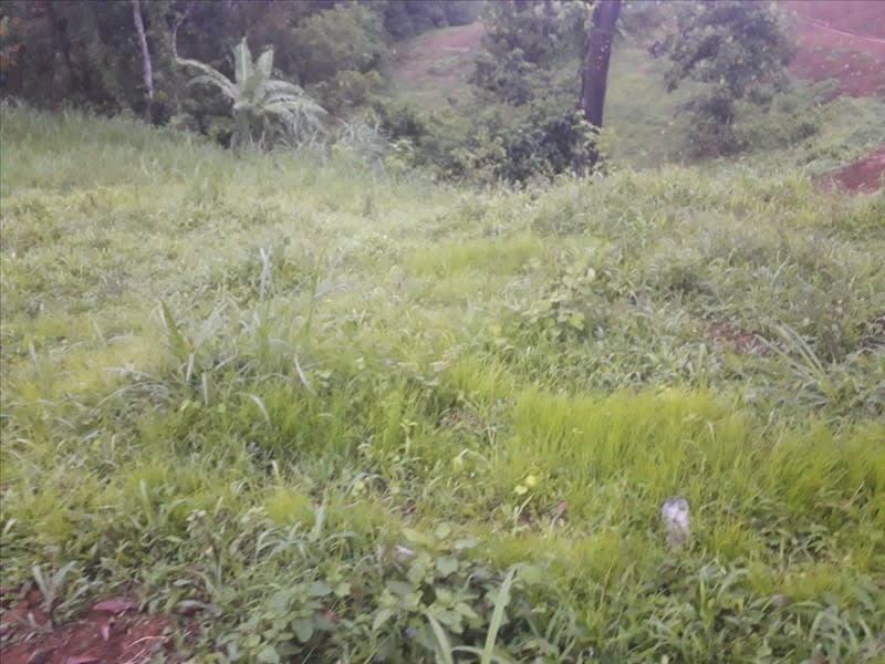 Vente terrain Ste marie 77000€ - Photo 1