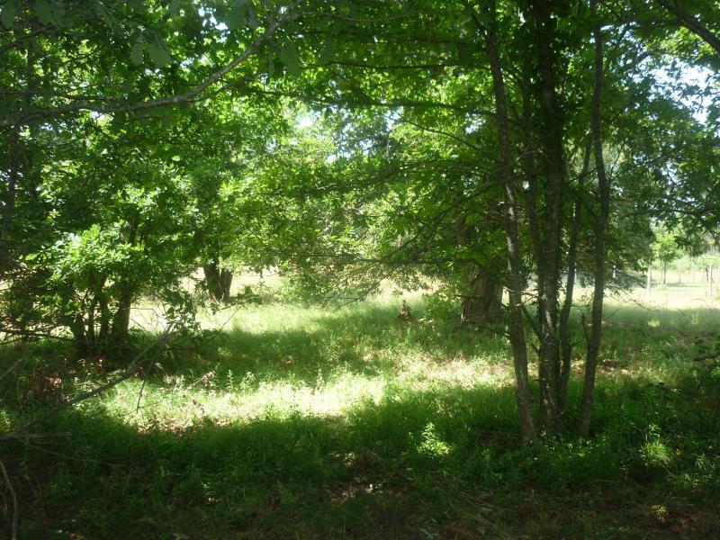 Vente terrain Luxey 56000€ - Photo 3