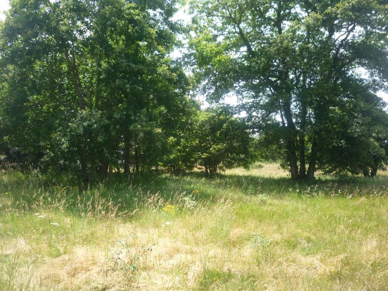 Vente terrain Luxey 56000€ - Photo 4