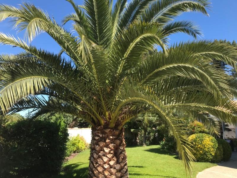 Sale house / villa Rivedoux plage 1470000€ - Picture 3