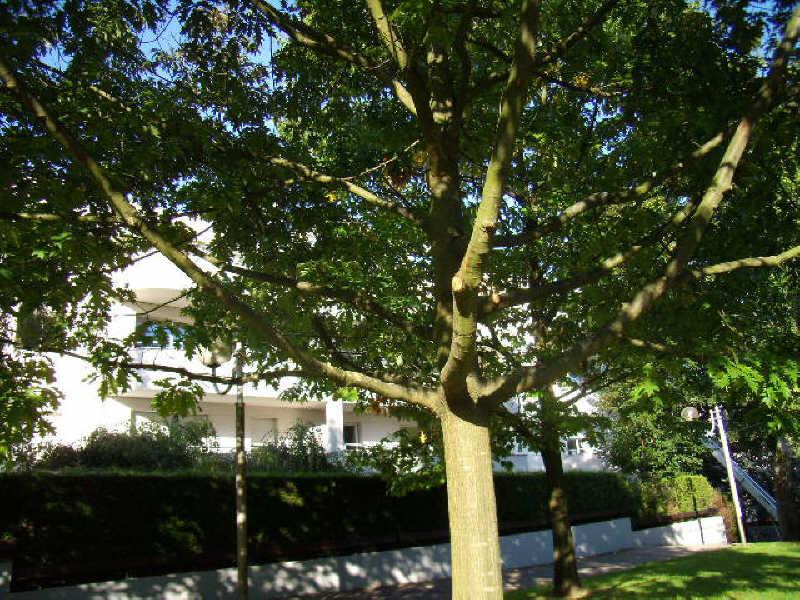 Location appartement Chatenay malabry 1117€ CC - Photo 9