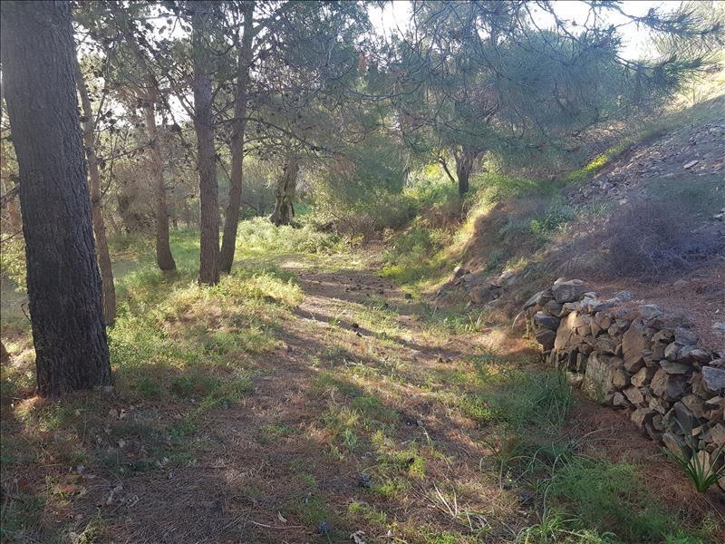 Vente terrain Corbara 720000€ - Photo 6
