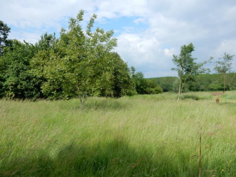 Vendita terreno Langon 53900€ - Fotografia 3