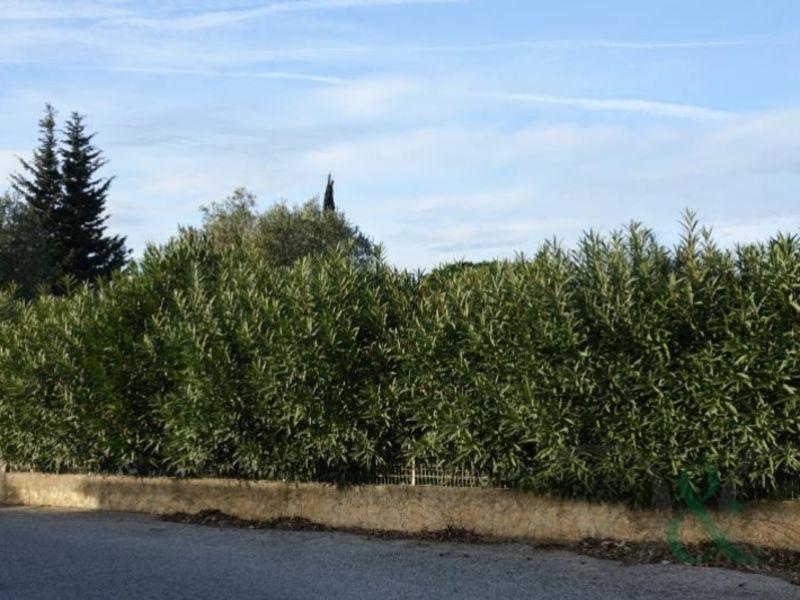 Verkauf grundstück Bormes les mimosas 286200€ - Fotografie 4
