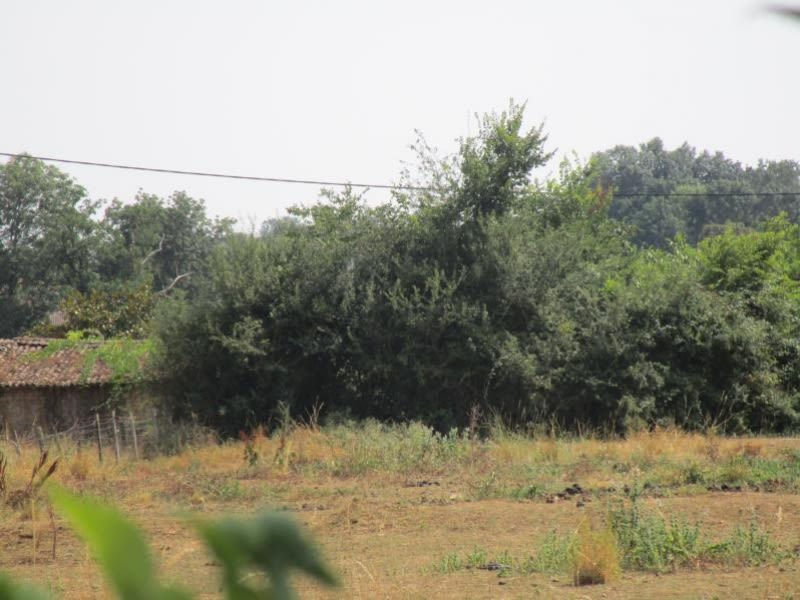 Vente terrain Souvigne 33200€ - Photo 2
