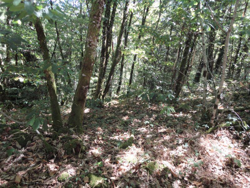 Vente terrain Bonnac la cote 17800€ - Photo 1