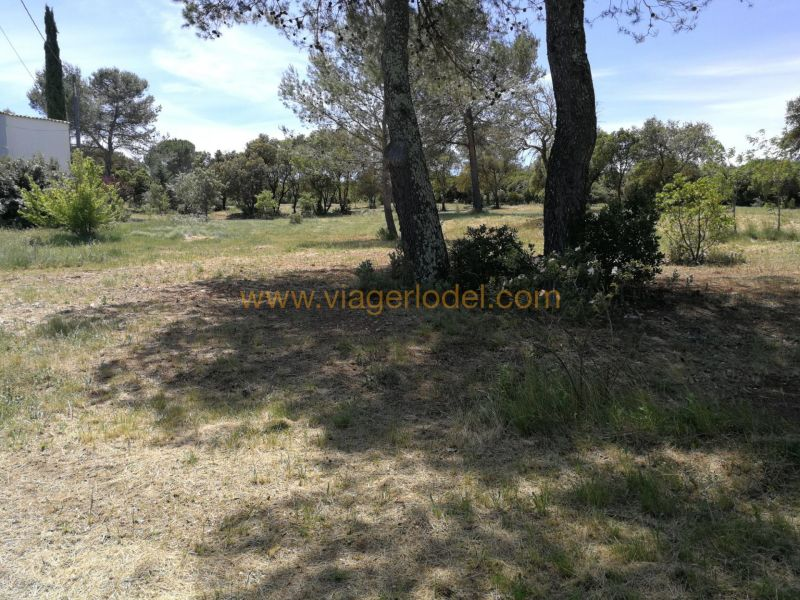 Life annuity house / villa Caveirac 55000€ - Picture 1
