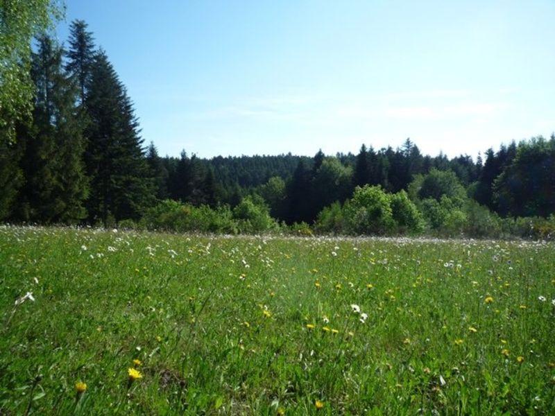 Vente terrain Le chambon sur lignon 56000€ - Photo 2