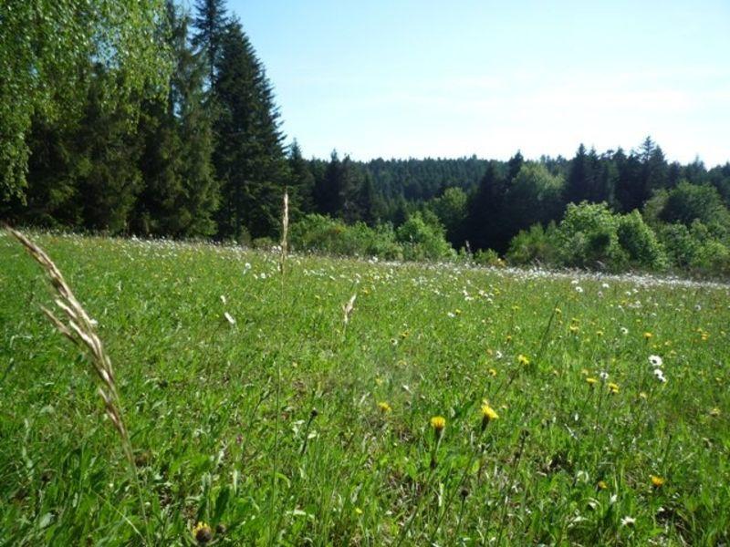 Vente terrain Le chambon sur lignon 56000€ - Photo 3