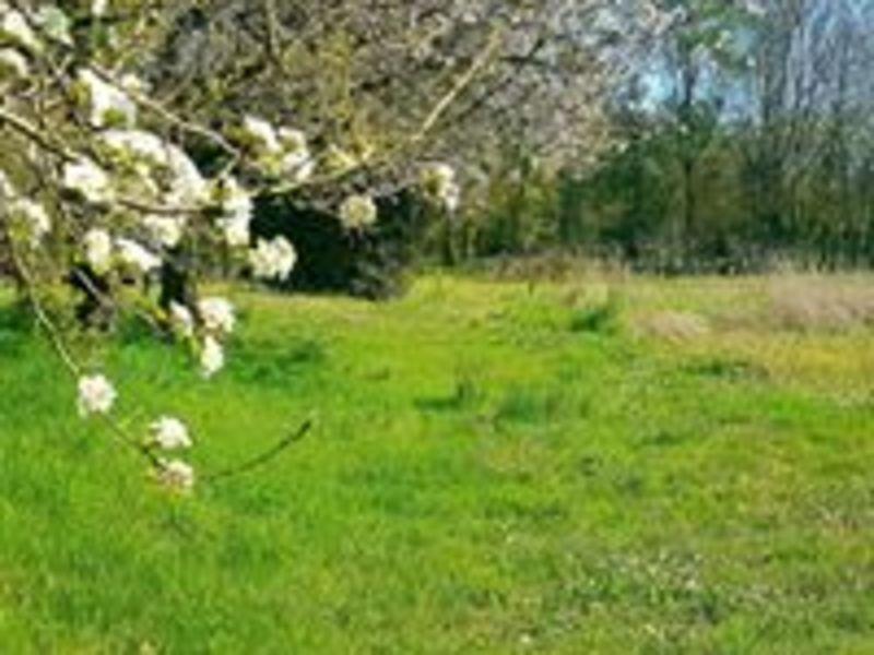 Vente terrain Brulain 20000€ - Photo 1