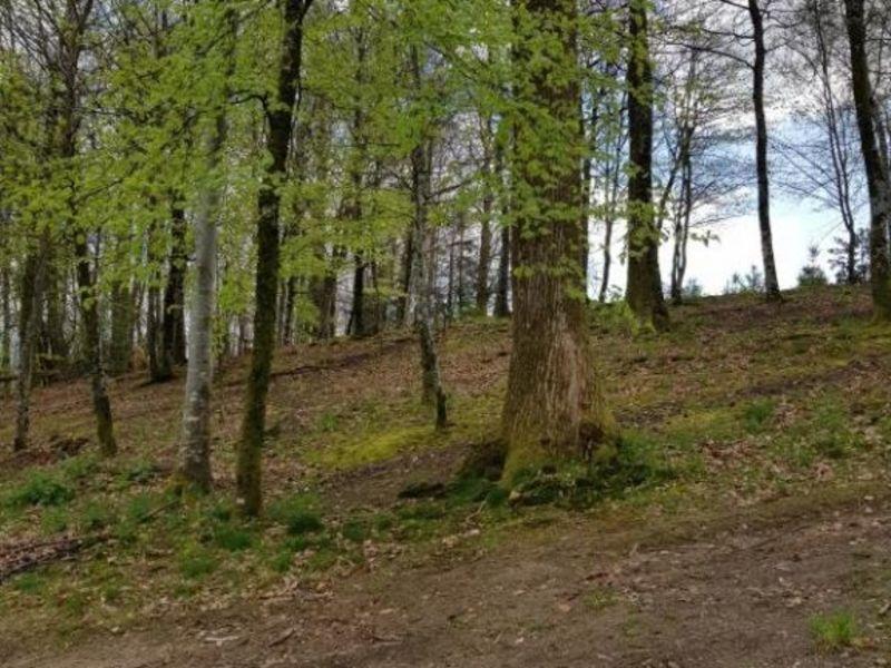 Vente terrain Ambazac 36000€ - Photo 9