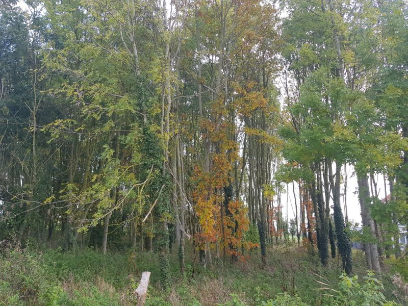 Vente terrain Arques 351080€ - Photo 2