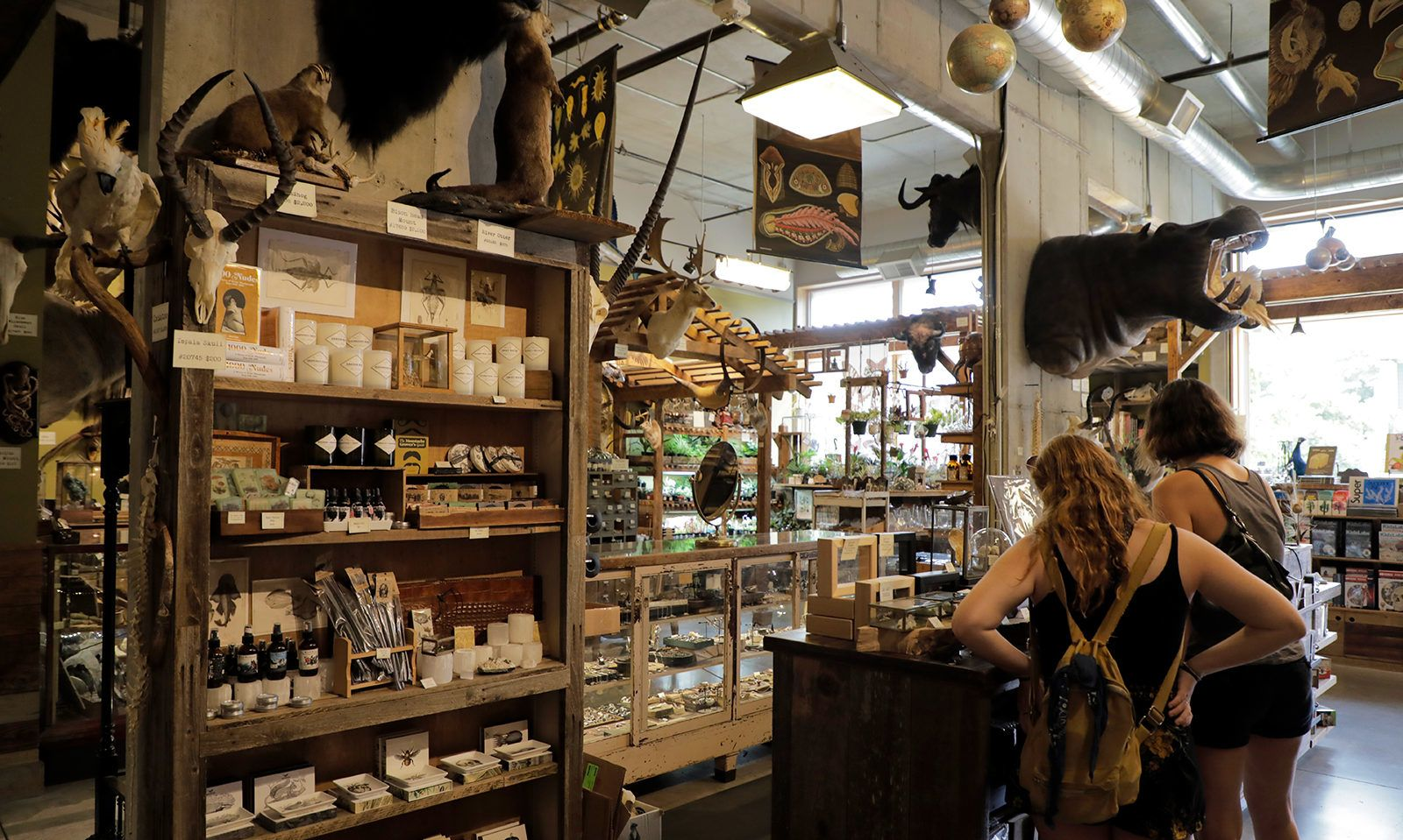 Paxton Gate on North Mississippi Avenue offers a plethora of taxidermy, preserved oddities and unique gifts.