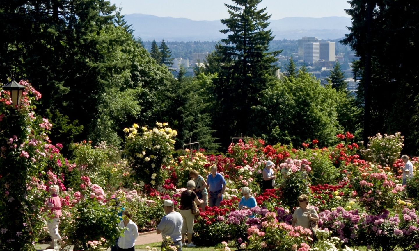 Portland International Rose Test Garden The Official Guide To