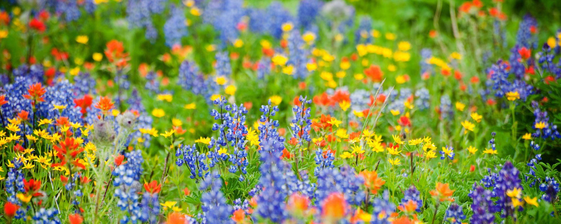 Wildflower Viewing