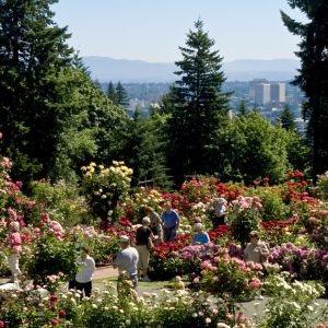 Things To Do In Portland The Official Guide