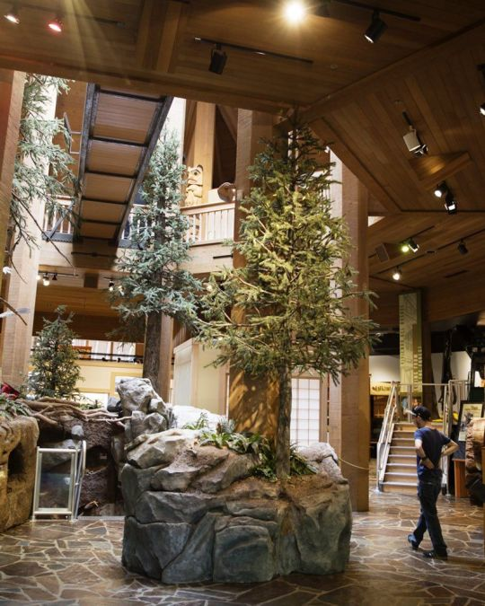 Learn about all types of flora and fauna at the World Forestry Center.