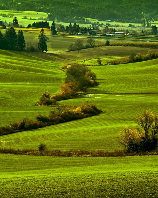 The Vineyard and Valley Scenic Route winds through Washington County farmland.
