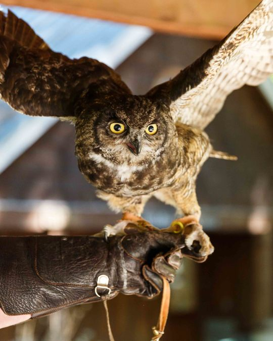 Make a new feathered friend at the Audubon Society\'s wildlife care center.