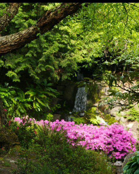 クリスタル・スプリング・シャクナゲ庭園